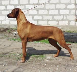 http://r-ridgeback.narod.ru/puppy190510.files/image007.jpg