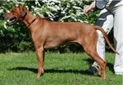 http://r-ridgeback.narod.ru/puppy190510.files/image068.jpg